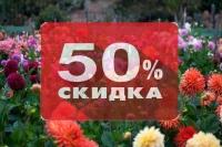 Георгины скидка 50%!!!